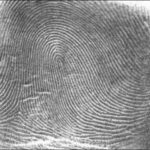 Source: https://commons.wikimedia.org/wiki/File:Fingerprint_Loop.jpg